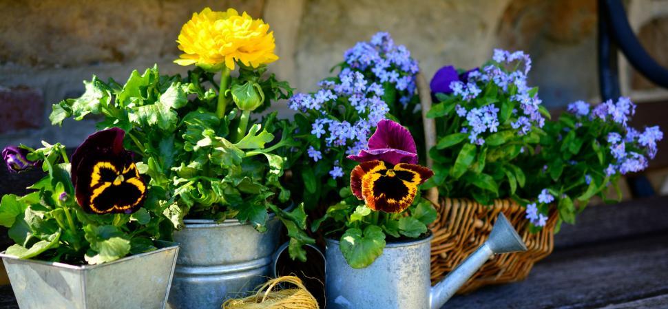 bandeau-jardin