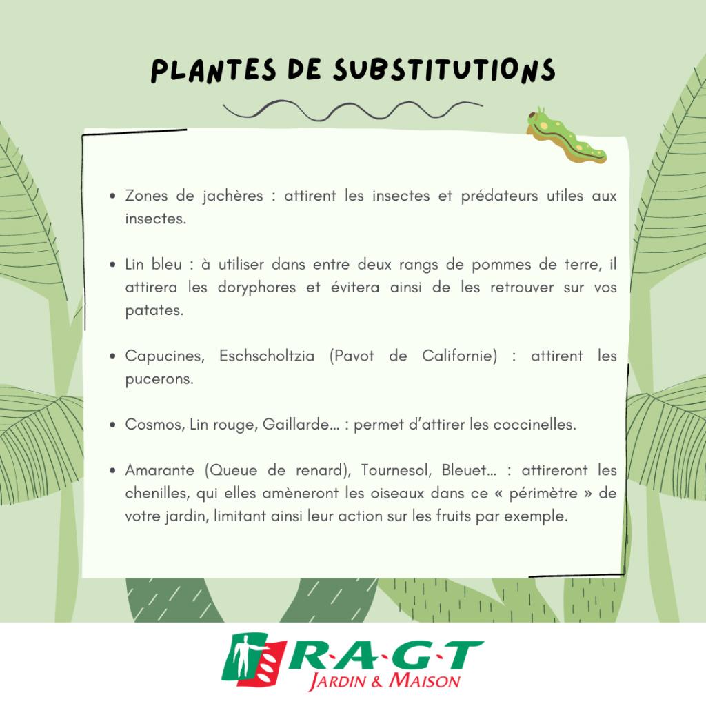 plantes-de-subtitutions-ragtjardinetmaison